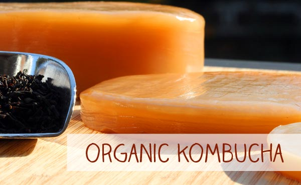 Organic Kombucha Tea fungus for your own Kombucha Tea fungus poduction is just one click away