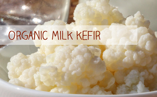 Organic Kefir and Milk Kefir for your Kefir production is just one click away