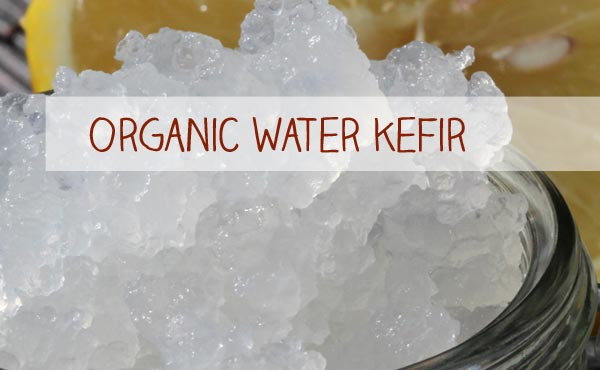 Organic Water kefir for your own Water Kefir production is just one click away